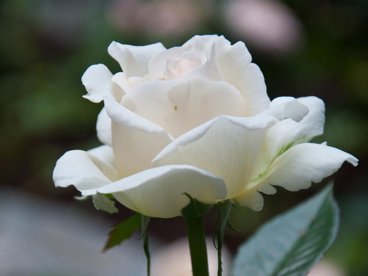 В ближайшее воскресенье Челябинская епархия проведет благотворительный праздник «Белый цветок»