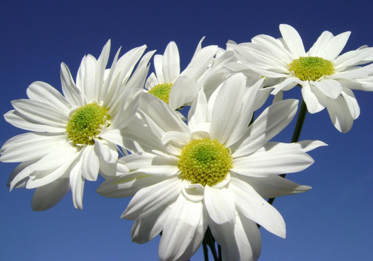 В Петербурге одной из площадок праздника «Белый Цветок» станет Детский хоспис